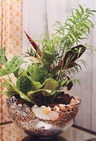 Растения в стеклянном сосуде